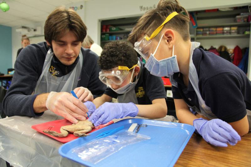 """Fourth-graders Jorlando Vega (center) and Diego Reyes prepare to dissect a frog with the help of a Quinnipiac University med student as part of a """"mini-med-school"""" expedition at Elm City College Prep, in New Haven, Connecticut."""