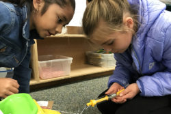 Aliah Corona and Dakkota Ryf, both 8 in this photo, check the force it takes to move a bag of potatoes six inches using wheels during their third-grade STEAM enrichment class at Pioneer Elementary School in Quincy, Washington.
