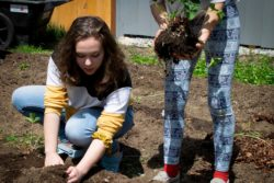 At the Telstar Freshman Academy in Maine, service learning is included as part of the curriculum. Bailey Fraser, 15 (left), and her stepsister Leah Kimball, 15, volunteer with Edible Bethel during their service learning block.