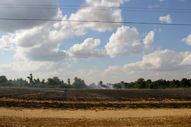 Crops burning outside of Greenwood, Mississippi on a recent fall afternoon. School nurse Samaria Stevenson said asthma seems to flare up during season changes and times when crops are burned or dusted. (Photo by Jackie Mader)